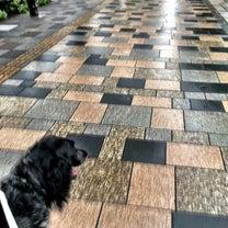 表参道で桜の見えるカフェレストランの記事に添付されている画像