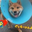 木曜日の幼稚園★(犬…