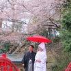 桜フォトウェディング♪