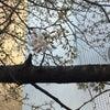 人生の春夏秋冬〜〜私の桜はいつ開花か?の画像