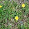 春が来たね~の画像