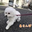 金曜日の幼稚園♪(犬…