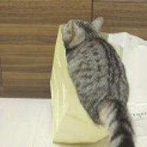 猫が袋に上手に飛び込…