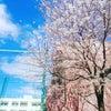 春ですね〜♪とこなめ散歩道の画像
