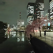 3~5分咲きの桜の中、皇居ラン(3月23日)