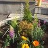 春ですね☆花壇の植え替えをしました☆の画像