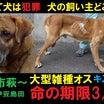 【お速報3】殺処分場出身・瀕死棄て犬だったジャガー君、里親さん決定