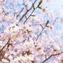 おおしか桜Week