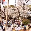 桜、お花見、上野!