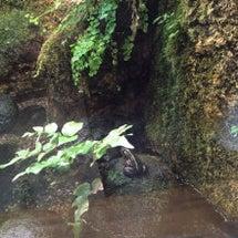 井の頭自然文化園  …