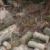 薪集めの画像