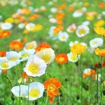 【誕生花】3月25日の記事に添付されている画像