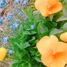 やっぱり、花が好きなんだな、、、の巻の記事より