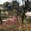 2018年椿山荘の桜…