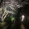 「夜桜」と「頭ぶらん」と「2周年感謝祭」の画像