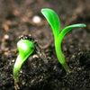 魂の畑…。耕してますか?の画像