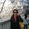 門前仲町で花見の画像