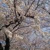 桜満開~ (大阪 南森町 オーガニックフェイシャル)の画像