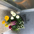 玄関の花!