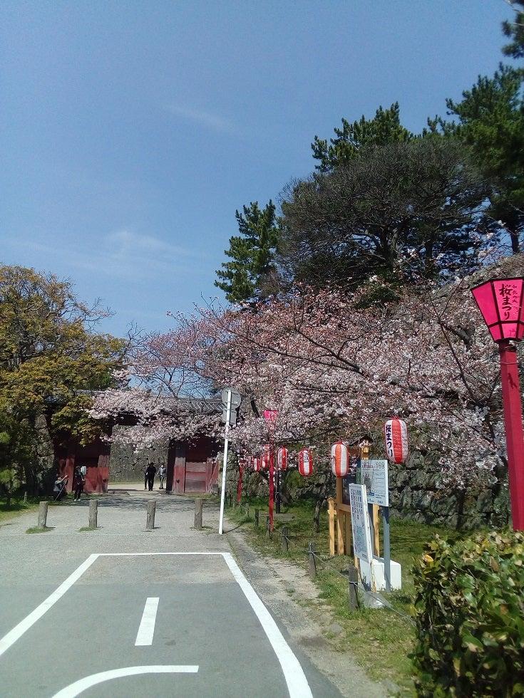和歌山城の桜(3/26現在)