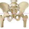 産後の骨盤ベルトの正しい使い方。の画像
