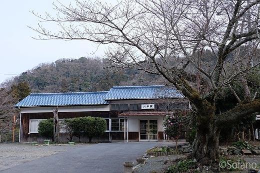 川平駅の木造駅舎と桜の老木