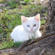 子猫の名前はマロくん…