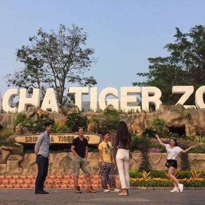 バンコクでは本物のトラが触れる!!!の記事に添付されている画像