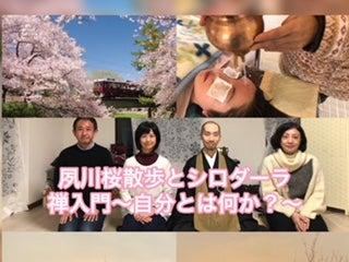 夙川桜散歩とシロダーラ 禅入門 自分とは何か?<br> 4月9日