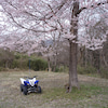 桜とバギーの画像