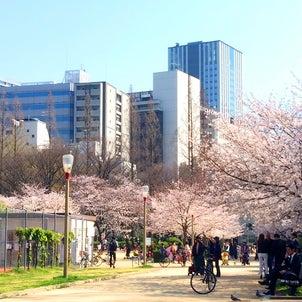 春満開 in 靭公園の画像
