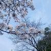 お花見日和 桜が綺麗な弁天公園♡の巻の画像