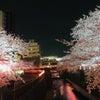 中目黒 目黒川夜桜満開の画像