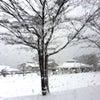3月の箱根は…の画像