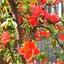 花びらに吹かれて♡恵比寿・桜の空