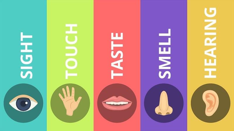 健康とは五感が正常なこと。では、五感が正常とは?