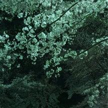 春コーデとお花見