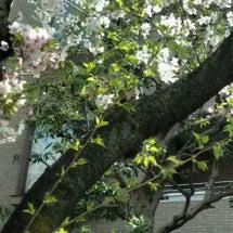 桜並木と今後のビジョ…