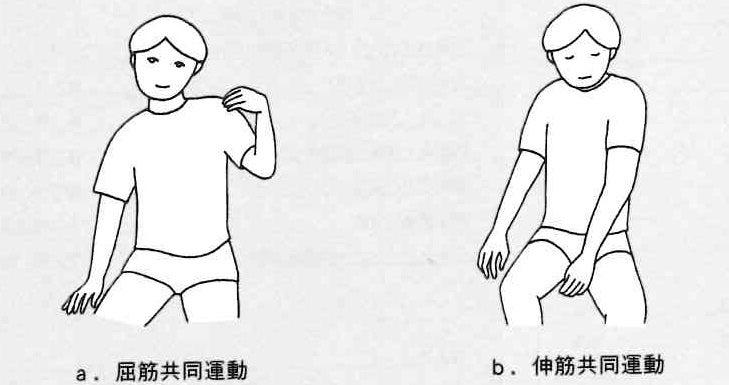 下肢 ブルン ストローム