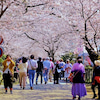 そば処 秋月池田屋~お花見で朝倉の郷土料理をいただくの画像