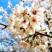 【ゼミ】5月1日(東京)、4日(大阪)、1dayゼミ~ロジックで整理する民法~