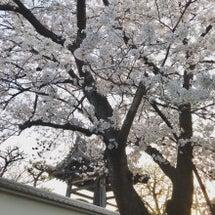 桜咲く季節。