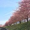 桜の木々からのメッセージの画像