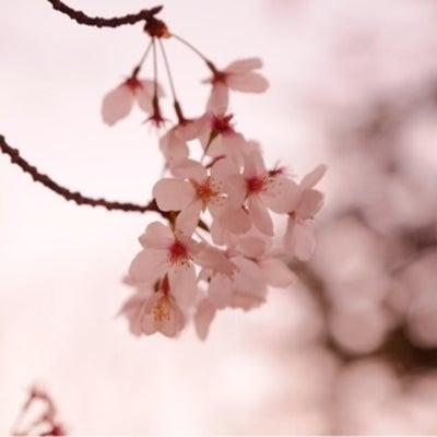 桜の撮影にも間に合います!3/25開催決定!! やさしい一眼カメラ教室の記事に添付されている画像