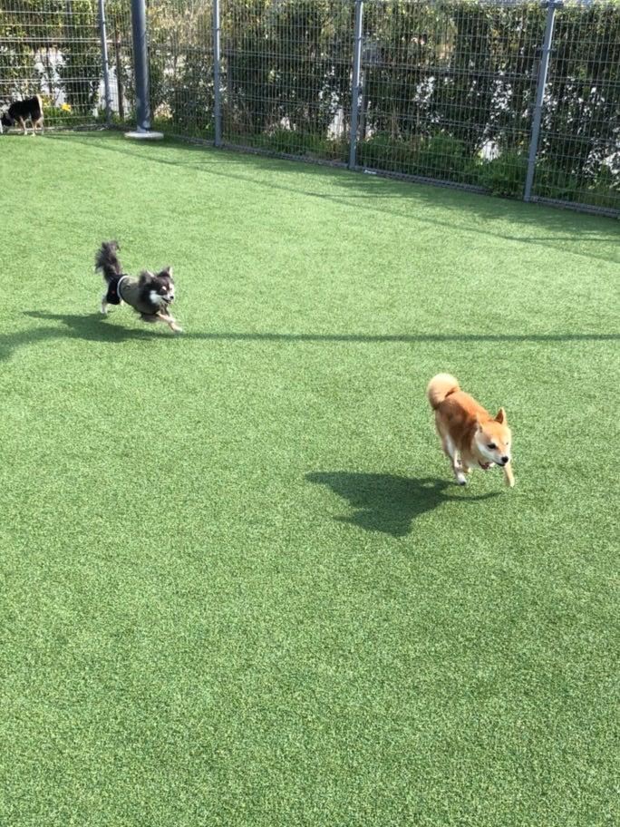 犬連れ富士山旅行 Vol.① 〜山中湖の周辺〜 | 豆柴☆なつ・ふゆ日和