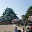 名古屋城桜満開