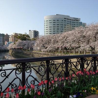 驚きの桜吹雪の記事に添付されている画像