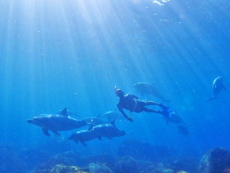 初心者のための、イルカと泳ぐ道...