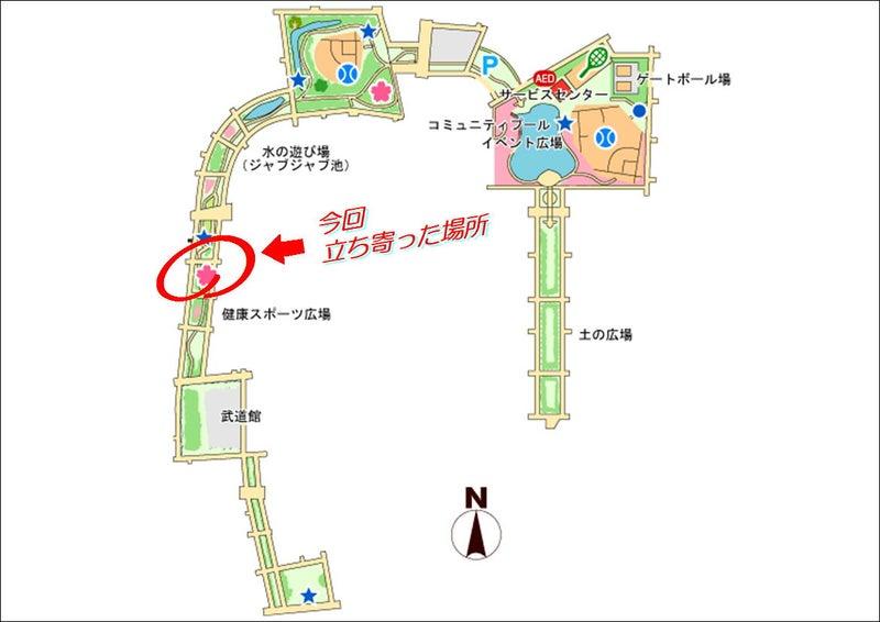 【東綾瀬公園】お花見☆タイマッサージ・台湾式足つぼ・アロマオイル・ロミロミ・バリニーズ 09