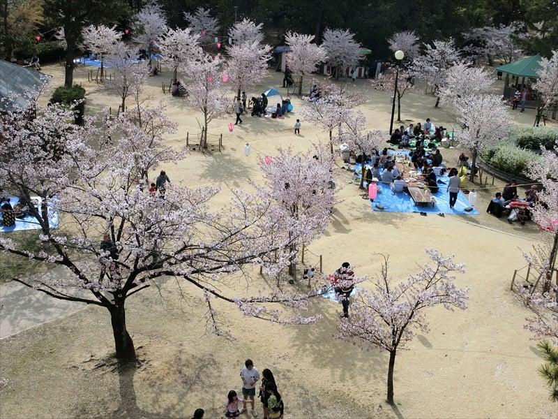 「雁宿公園 桜」の画像検索結果